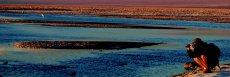 Salar de Atacama (Laguna Chaxa y Reserva Flamencos)