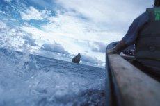 Hi Ika: Pesca Artesanal