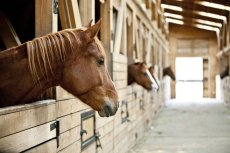 Puntilla del Toro Horseback Riding