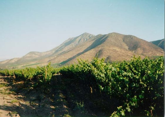 La Mágica Ruta del Vino en Valle de Colchagua