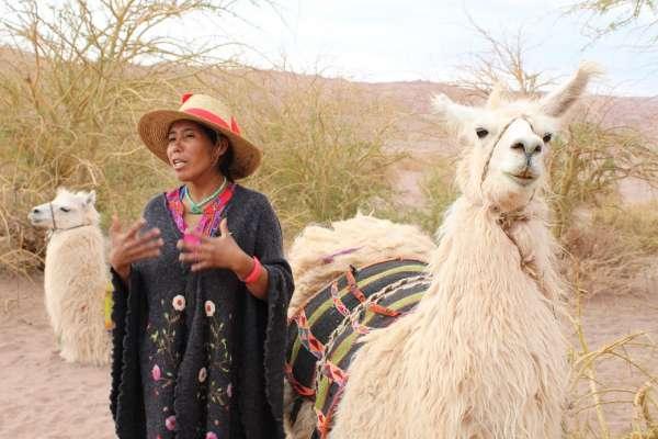 Caravana Ancestral San Pedro de Atacama