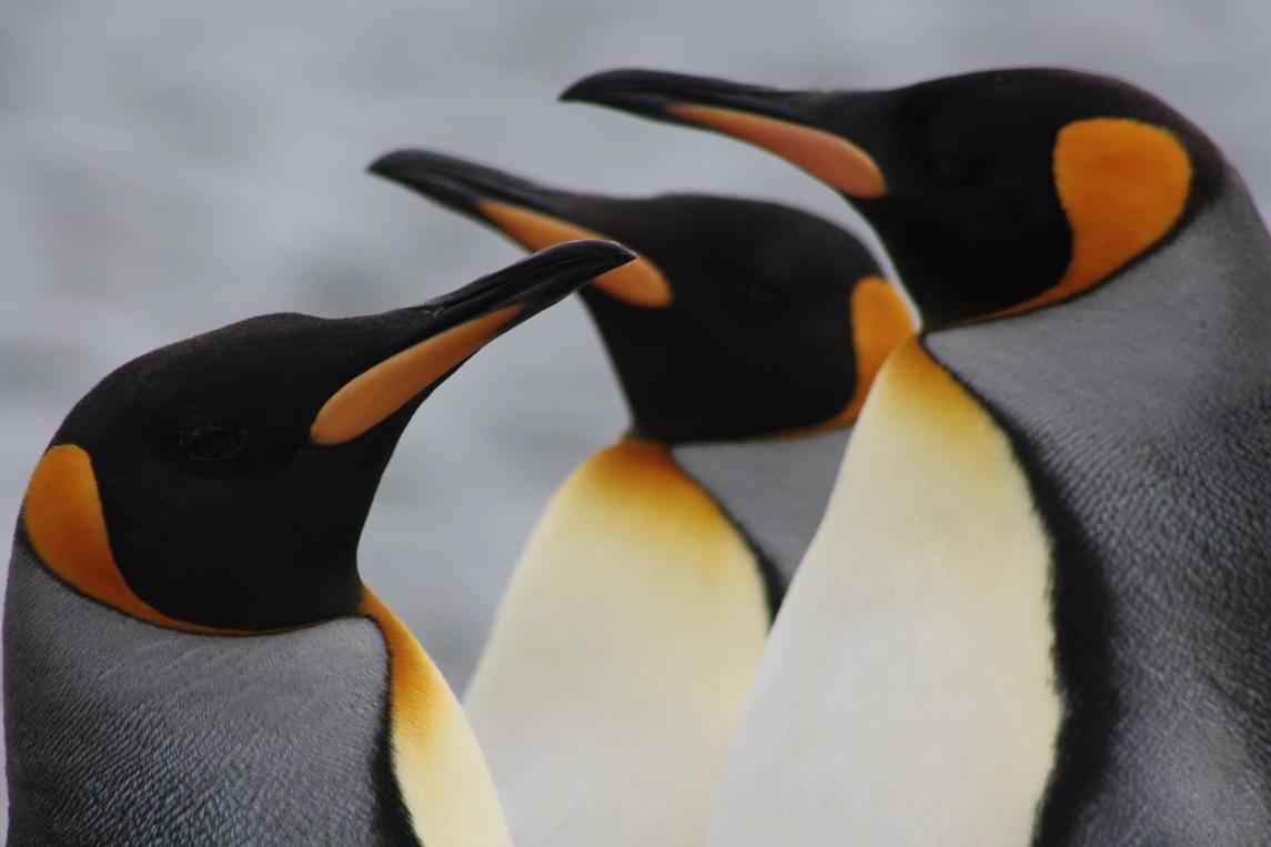 Parque Pinguim Rei - Full Day Tierra del Fuego