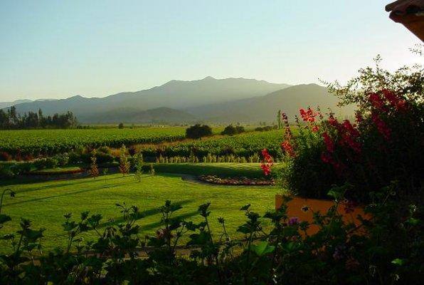 Ruta del Vino de Valle Casablanca