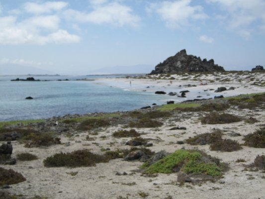 Damas Island: Humboldt Penguin National Reserve