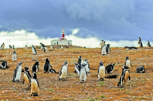 Magdalena Island and Marta Island Penguin Colony