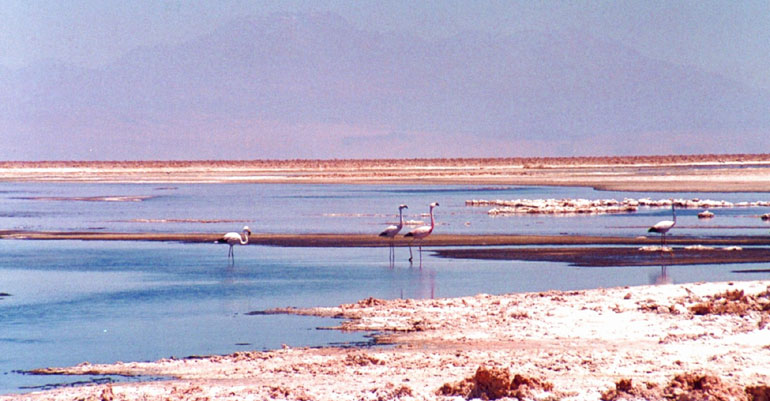 Altiplanic Lagoons and Salt
