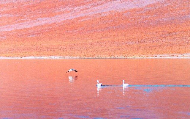 Lagunas Altiplánicas e Salar