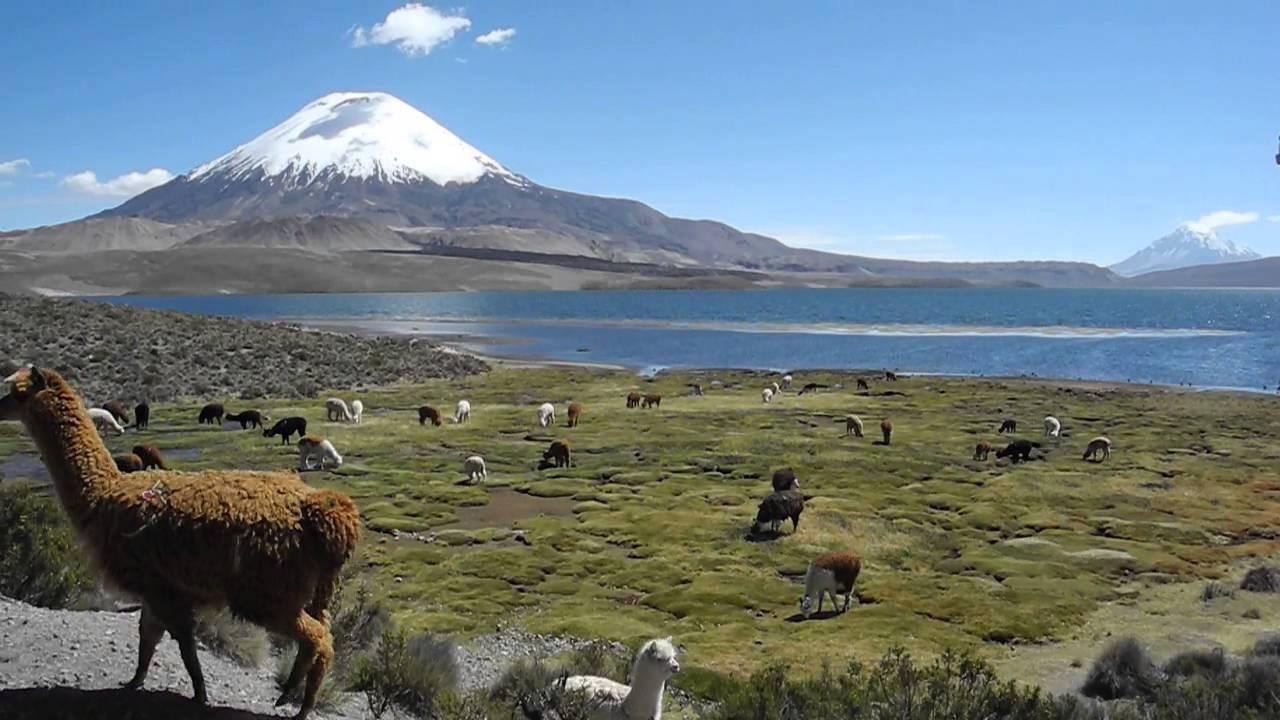 Parque nacional lauca e putre chile for Piletas publicas en zona norte