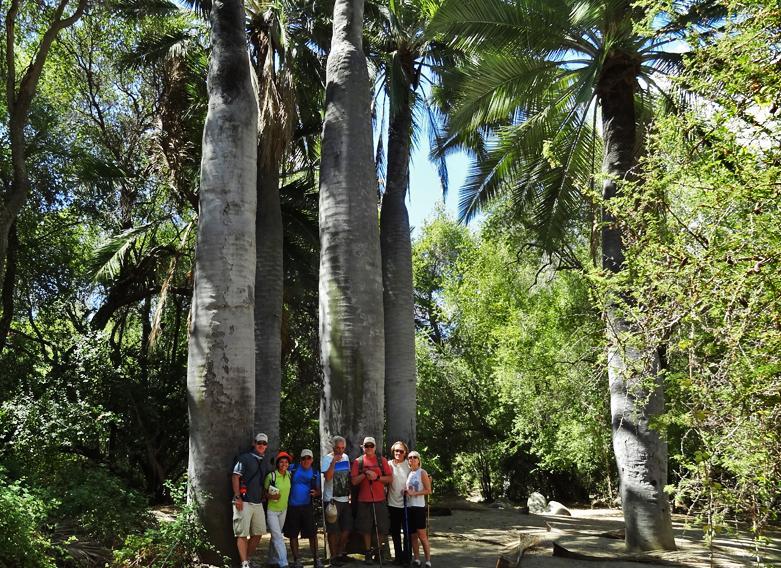 Parque Nacional La Campana - Hike al Bosque Milenario