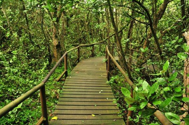Fray Jorge National Park