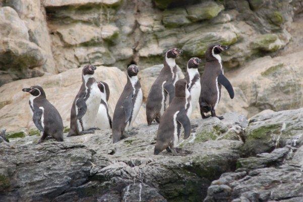Reserva Nacional Pingüino de Humbold