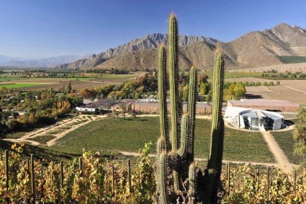 Ruta del Vino Valle del Aconcagua, Viña Mendoza