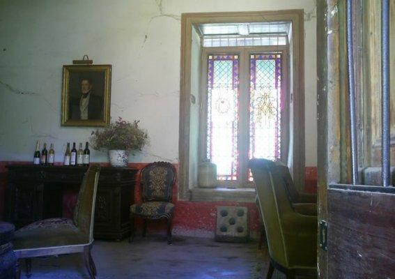 Aconcagua Valley Wine Route, Sanchez de Loria Vine