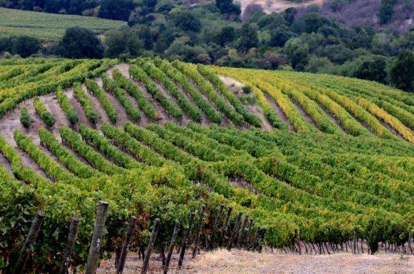 Ruta del Vino Valle del Maule